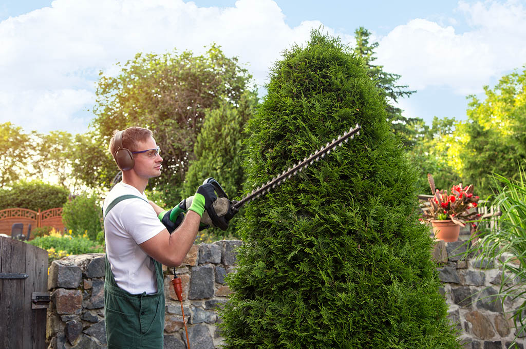 cura piante e giardino