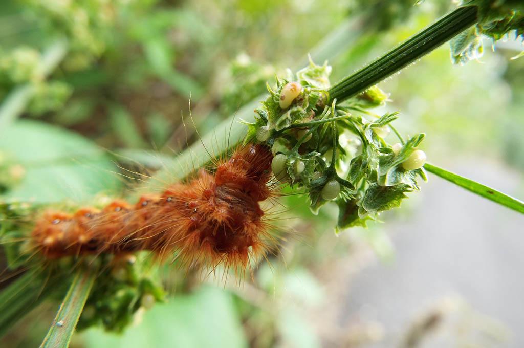 anti parassiti piante